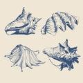 Illustration With Blue Shells