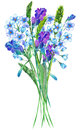 An illustration with a bouquet of the watercolor blue forget-me-not flowers (Myosotis), lavender flowers and spikelets Royalty Free Stock Photo