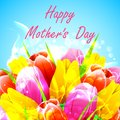 Illustration of bunch of tulip in happy mother s day Stock Photo