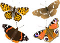 Illustration  butterfly collection Stock Photography