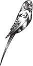 Illustration of canary bird black and white style Royalty Free Stock Photos