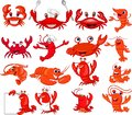 Cartoon shrimp and crab collection set Royalty Free Stock Photo
