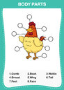 Illustration of chicken vocabulary part of body