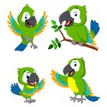 The collection of the green parrots with the different expression Royalty Free Stock Photo