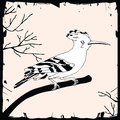 Illustration of common hoopoe or eurasian on the branch Stock Images