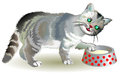 Illustration of curious gray kitten looking for food in a bowl.