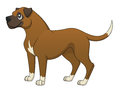 An illustration of a cute cartoon boxer standing Royalty Free Stock Photos