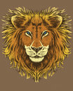 Illustration d'un lion Images stock