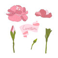 Illustration delicate carnation flower carnationflower spring greeting card summer composition spring Stock Photography