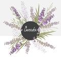 Illustration delicate lavender flower spring greeting card Stock Images