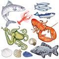 Sea fish illustration Royalty Free Stock Photo