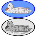 Illustration duck Royalty Free Stock Images