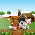 Farm animals happy in front of cage