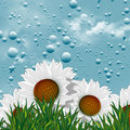 Illustration fontvieille chamomile flowers water droplets Stock Photo
