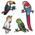 illustration of four cool birds