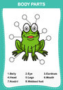 Illustration of frog vocabulary part of body