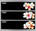 Illustration  of Hawaii flower Frangipani, white Plumeria  brochure template. Royalty Free Stock Photo