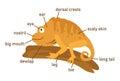 Illustration of iguana vocabulary part of body