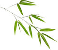 Illustration with isolated green bamboo branch on white bacground Royalty Free Stock Images
