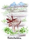 Illustration Landmark sketching wild reindeer in the Kamchatka