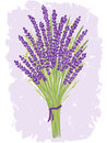 Illustration of lavender bouquet Stock Photos