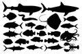 Illustration of marine animals