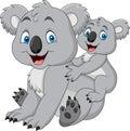 Mother and baby koala Royalty Free Stock Photo