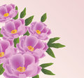 An illustration of peony flowers Stock Photography