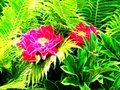 Illustration of peony flowers in neon color