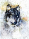 Illustration Portrait of a Wolf, crackle background Royalty Free Stock Photo