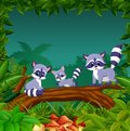 The purple racoon playing on the brown trunk together with different posing