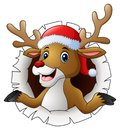 Reindeer in Santa hat tearing through the background Royalty Free Stock Photo