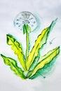 Illustration ripened dandelion seeds Royalty Free Stock Photo