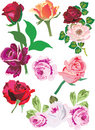 Illustration with rose collection Royalty Free Stock Photo