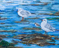 Illustration of seagulls and sanpiper on a beach original painting seaside birds the with an incomming tide there are two gulls Royalty Free Stock Image