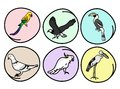 An Illustration Set of Beautiful Wild Birds Royalty Free Stock Images