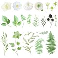 Illustration set of green leaves and flowers isolated on white background. Watercolor summer and spring plant collection Royalty Free Stock Photo