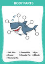 Illustration of shark vocabulary part of body