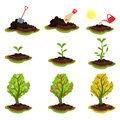 Flat vector illustration showing plant growing stages. Process from planting seeds to tree with ripe apples. Gardening