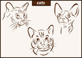 Illustration shows a cats