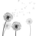 Illustration of some isolated dandelion Royalty Free Stock Images
