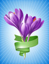 Illustration of spring flowers crocus with green ribbon Royalty Free Stock Image