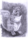 Illustration-Squirrel Stock Photo