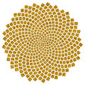 Sunflower seeds - golden ratio - golden spiral - fibonacci spiral Royalty Free Stock Photo