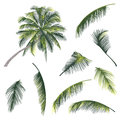 Illustration of a tree and palm tree branches vector Royalty Free Stock Image