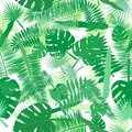 Illustration of tropical leaves in shades of green on a white background. Vector seamless pattern. Tropical illustration.