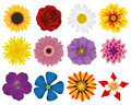 Illustration Vector Graphic Set Flowers Royalty Free Stock Photo