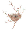 Illustration of the watercolor bird nest with eggs on the tree branches, hand drawn on a white background