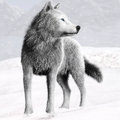 Illustration of a White wild wolf with blue eyes and winter background Royalty Free Stock Photo