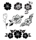 Illustrations of flowers isolated black and white Stock Images